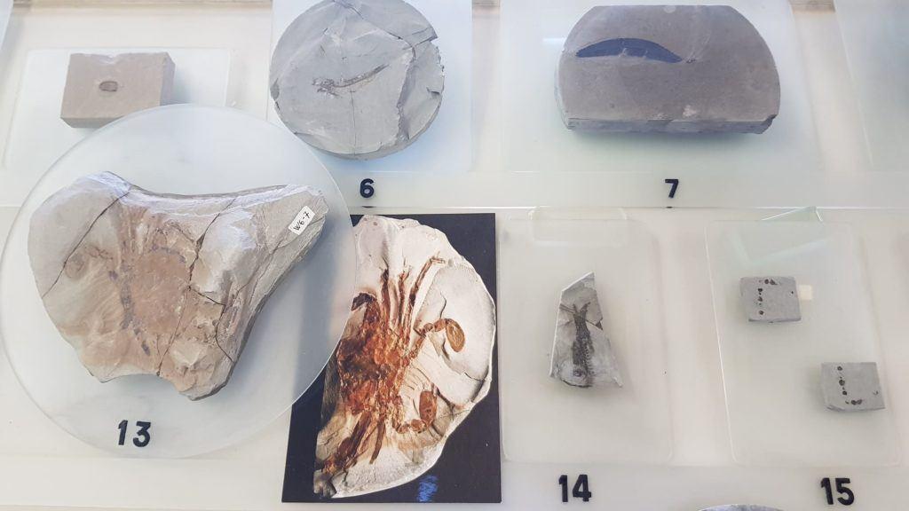 Les fossiles - Musée de la Mine et de la Potasse